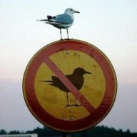 noBird